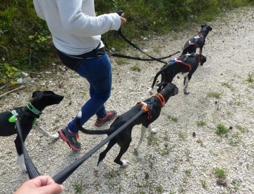 Kleine Hunde kommen ganz groß raus